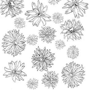 flower fields ~ black and white by Jane LaFazio