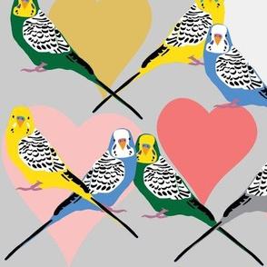 Love Budgies - 5