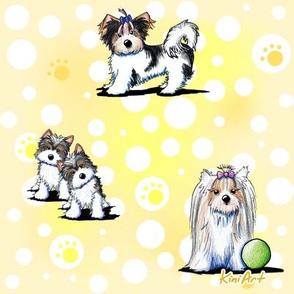 LG Biewer Yorkie Terriers on Yellow