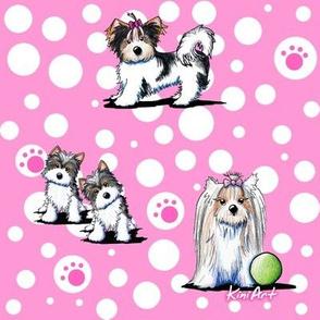 LG Biewer Yorkie Terriers On Pink