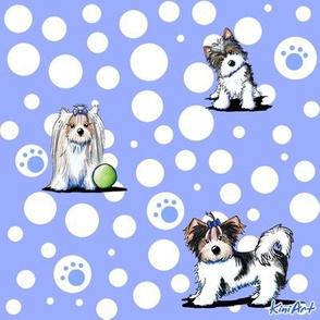 LG Biewer Yorkie Terrier Boys