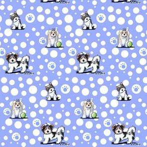 Small Biewer Terrier Boys