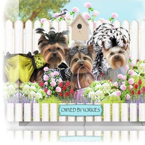 Owned By Yorkies