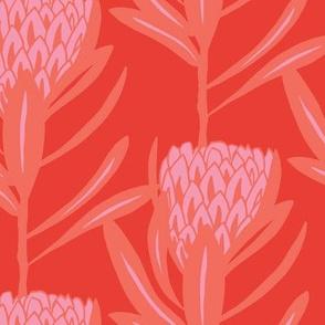 Protea Large - Coral Bright