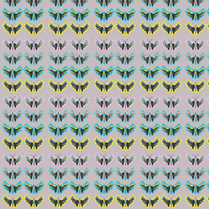 Mariposatecnicolor