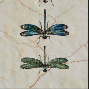 dragonflys ditty bag