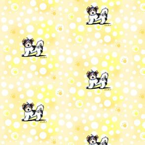 Banana Cream Biewer Yorkie Terriers