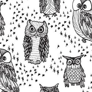 Little Owl in White