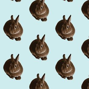 sitting rabbit in aqua