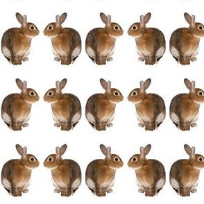 bunny reflections