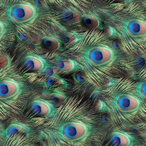 Peacock Feather Animal Print