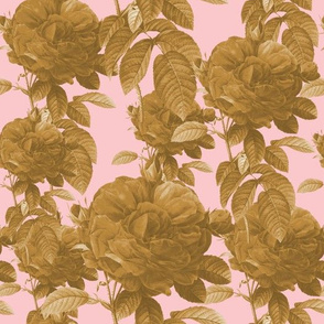 Redoute' Rose ~ Riot of Gilt ~ Dauphine