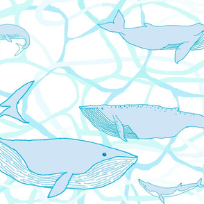 Whales in Water
