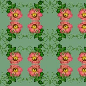 Wild Roses mirrored
