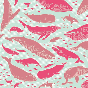 Whale Gathering Pink