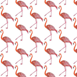 flamingo150dpi