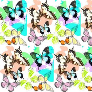 Iridescent  Butterflies 1