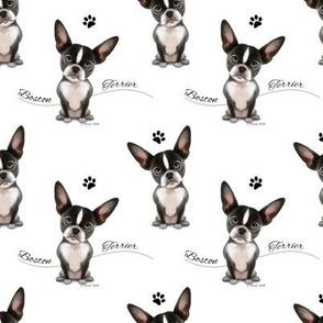 Boston Terrier Black white Pattern M
