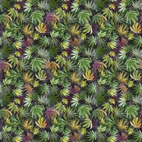 Midnight Cannabis Leaves