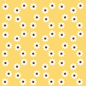 white daisies on yellow