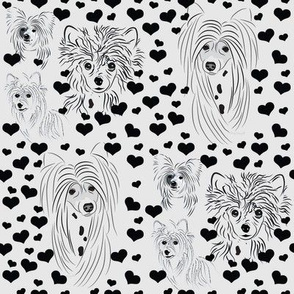 Chinese Crested Black & White with Hearts