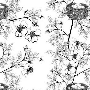 Wild roses & Birds Nest