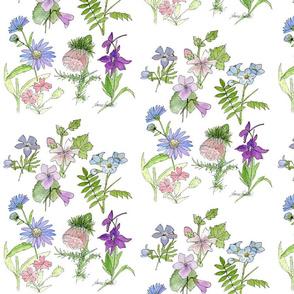 Botanical Wildflowers