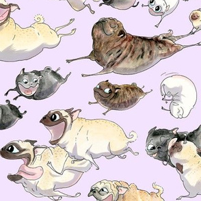 Pugs on the Move - lavender