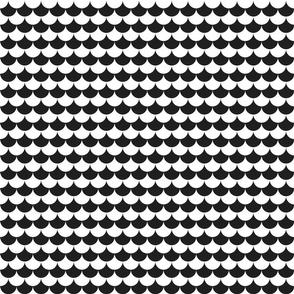 scallop : black + white