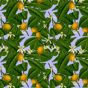 Lemon Botanical ~ Regency
