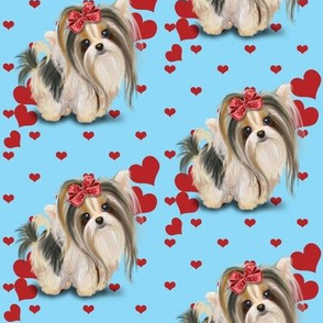 Biewer/Parti/Yorkie Blue and hearts M