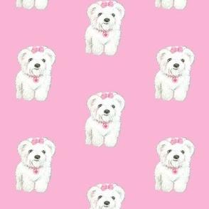 Cute  White  Fluffy dog // white Puppy