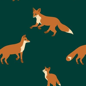 evergreen foxes