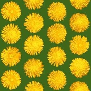 dandelions on leaf green