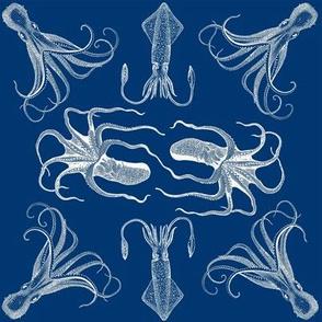 cephalopod squared