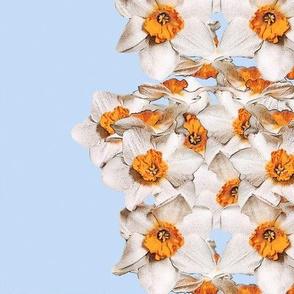 Daffodil Skies Border