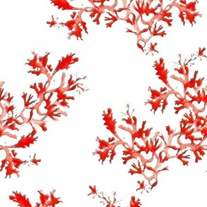 Seaweed in red