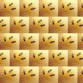 Honeycomb_with_bees_2