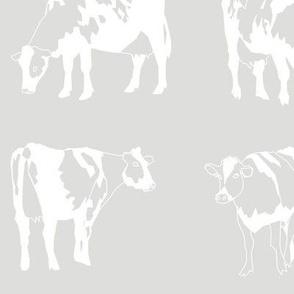 Dairy Cows Grey