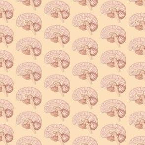 Brain inside repeat-ed