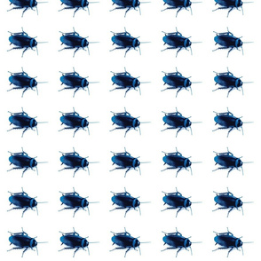 Indigo Roaches