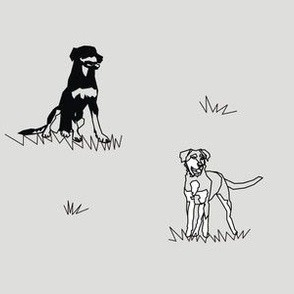 Working Farm Dogs