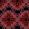 3245001-neon-by-sarafrigo