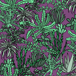Succulent Jungle