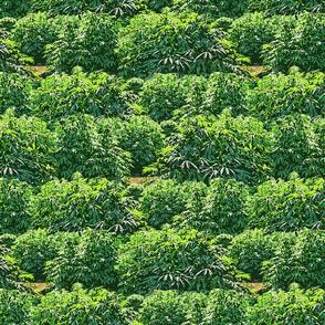 My Favorite 420 Garden
