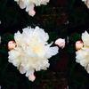 3266807-flower-by-franpa