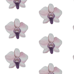 Orchid, white