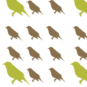 green_and_brown_birds