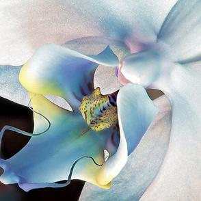 Orchid_Glow_Three