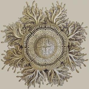Haeckel Jellyfish ceiling medallion
